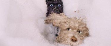 l-ile-aux-chiens-photo-1015578