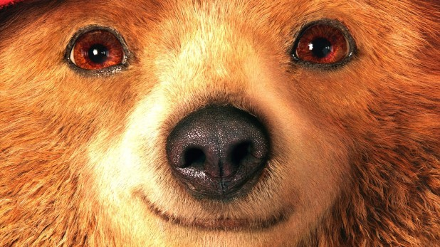 Paddington gros plan visage