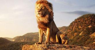 Le Roi Lion Disney 17 juillet 2019 premières images