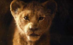 Le Roi Lion version live juillet 2019 premières photos