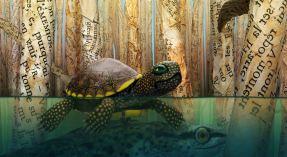 Bonjour le Monde ! tortue